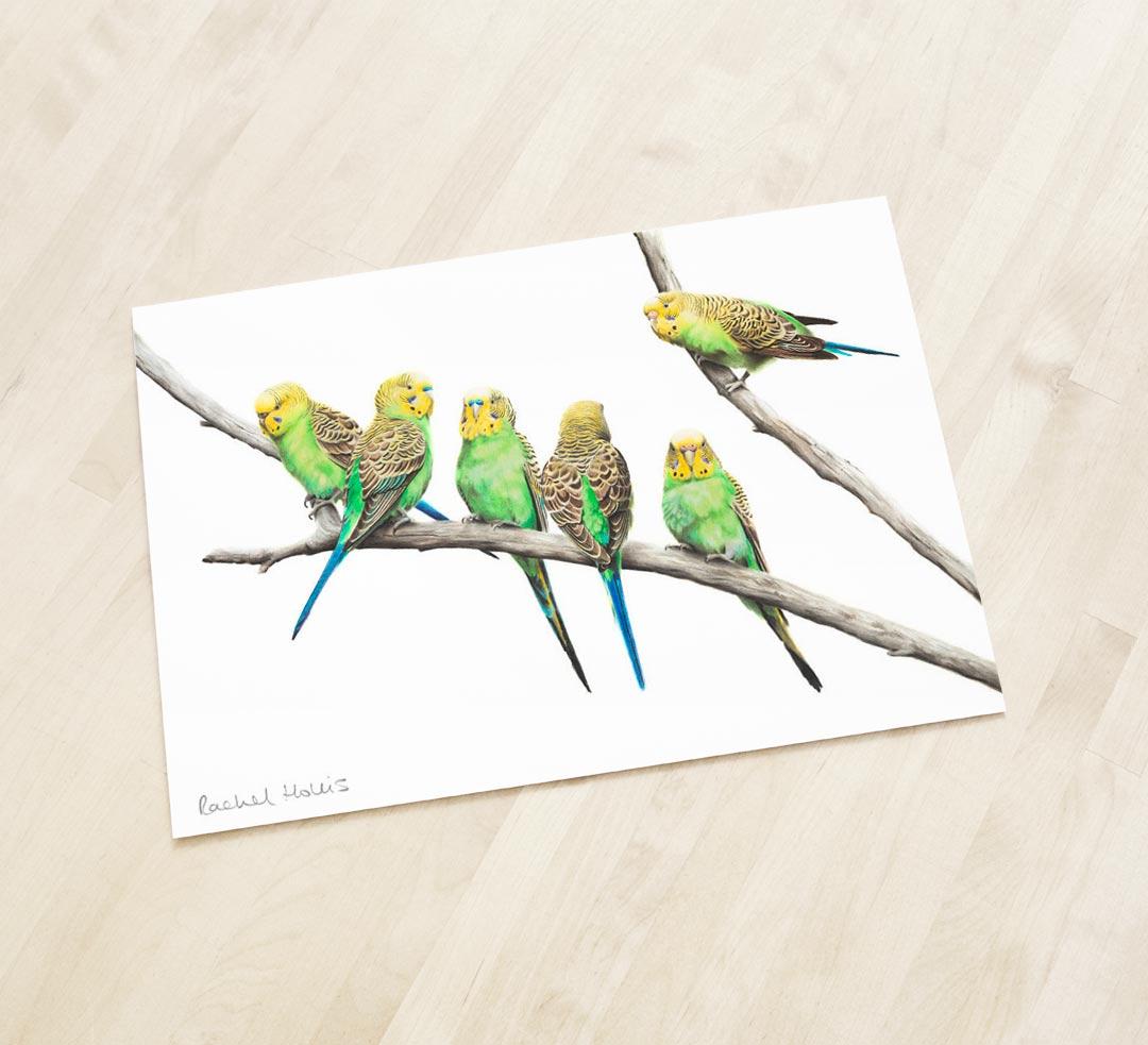 Wild Budgerigars – Fine Art Print