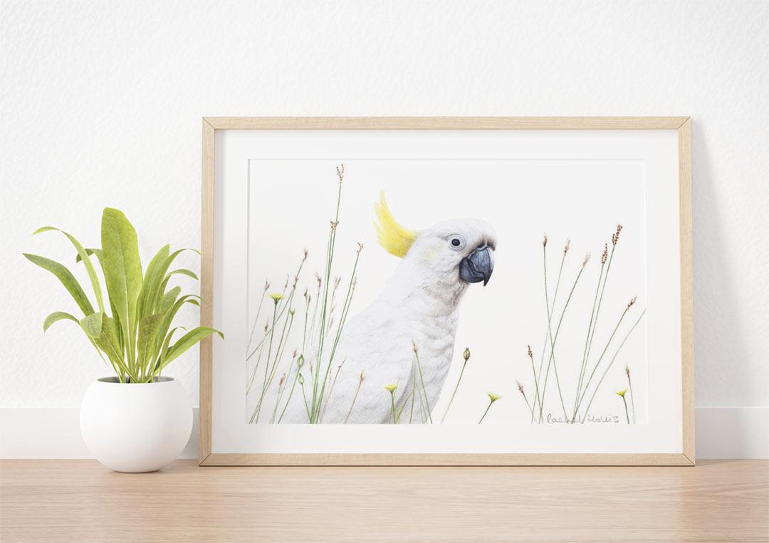 Sulphur-crested Cockatoo – Example of Framed Fine Art Print
