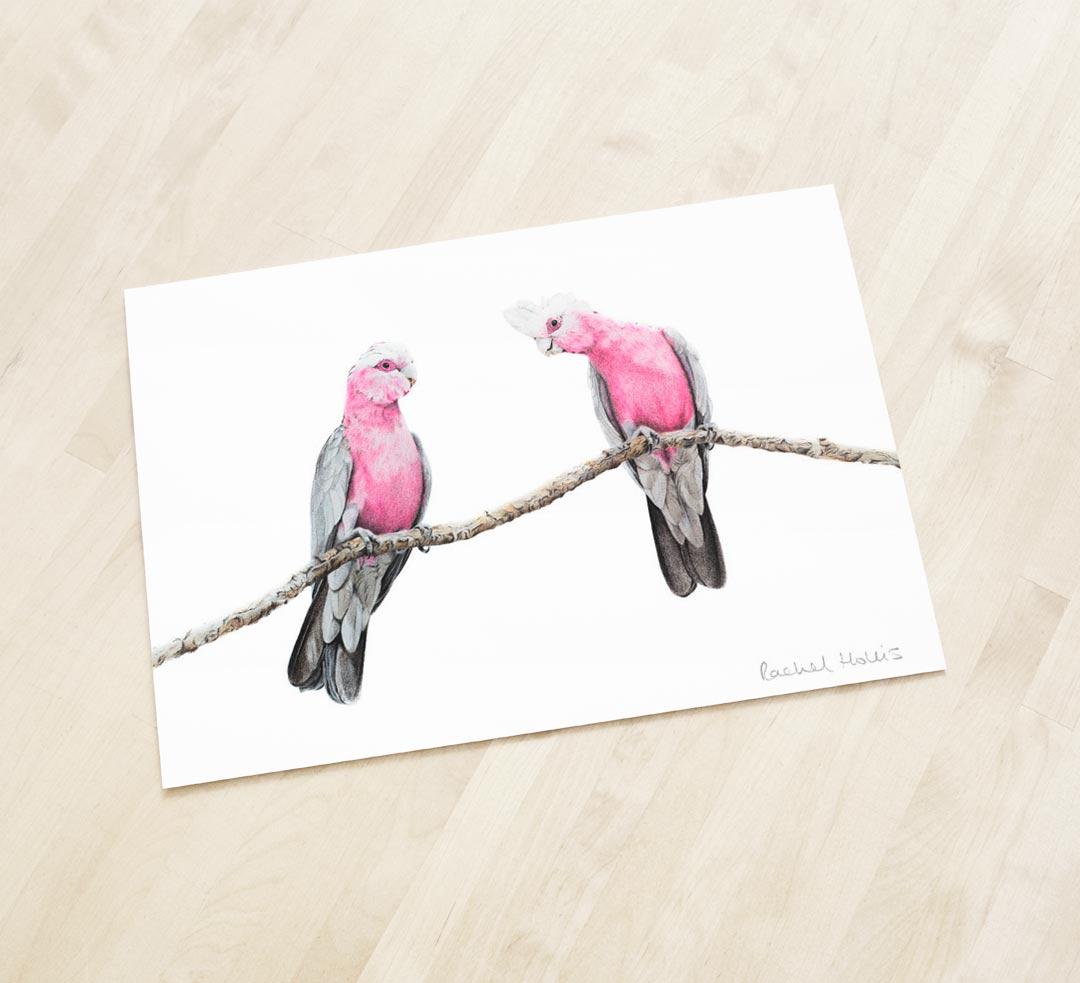 Galahs – Fine Art Print
