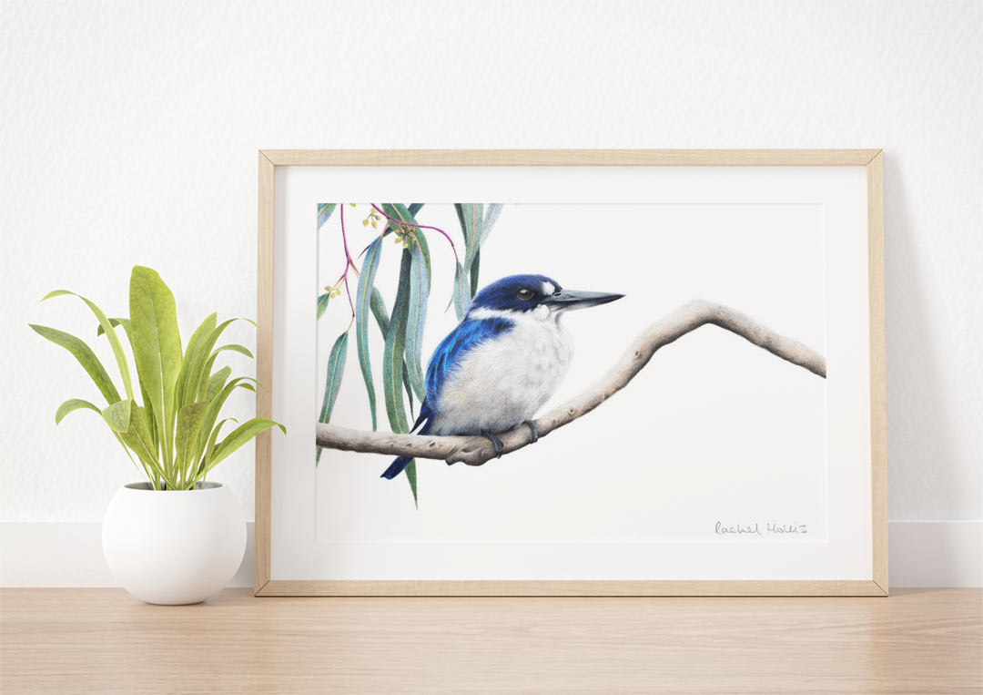 Forest Kingfisher – Example of Framed Fine Art Print