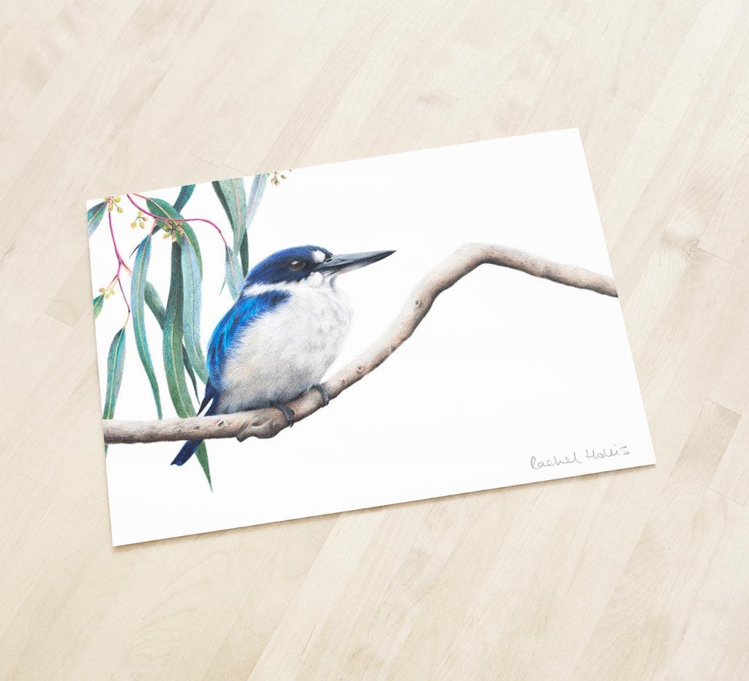 Forest Kingfisher – Fine Art Print