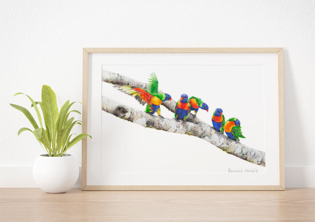 Rainbow Lorikeets – Example of Framed Fine Art Print
