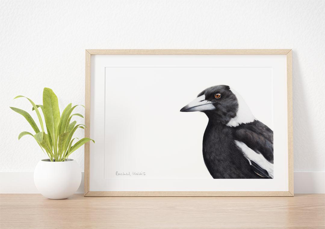 Australian Magpie – Example of Framed Fine Art Print