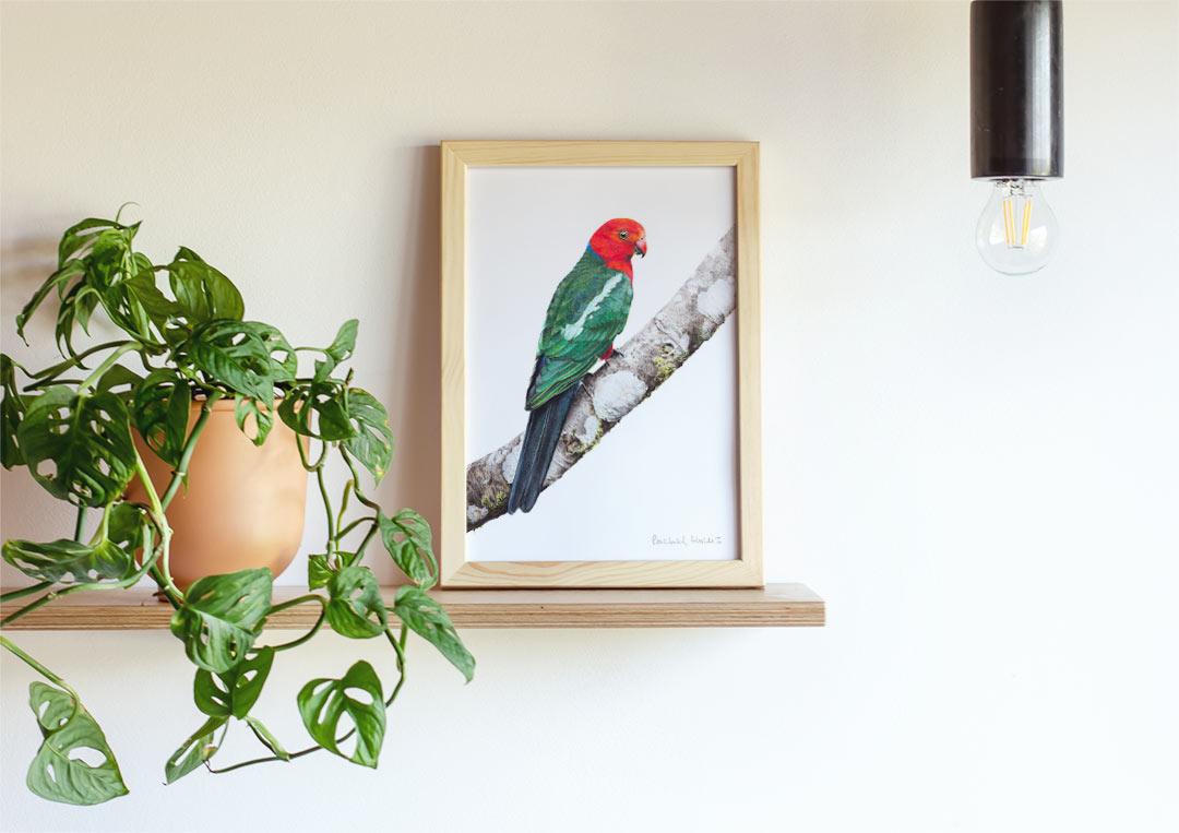 Australian King Parrot – Example of Framed Fine Art Print