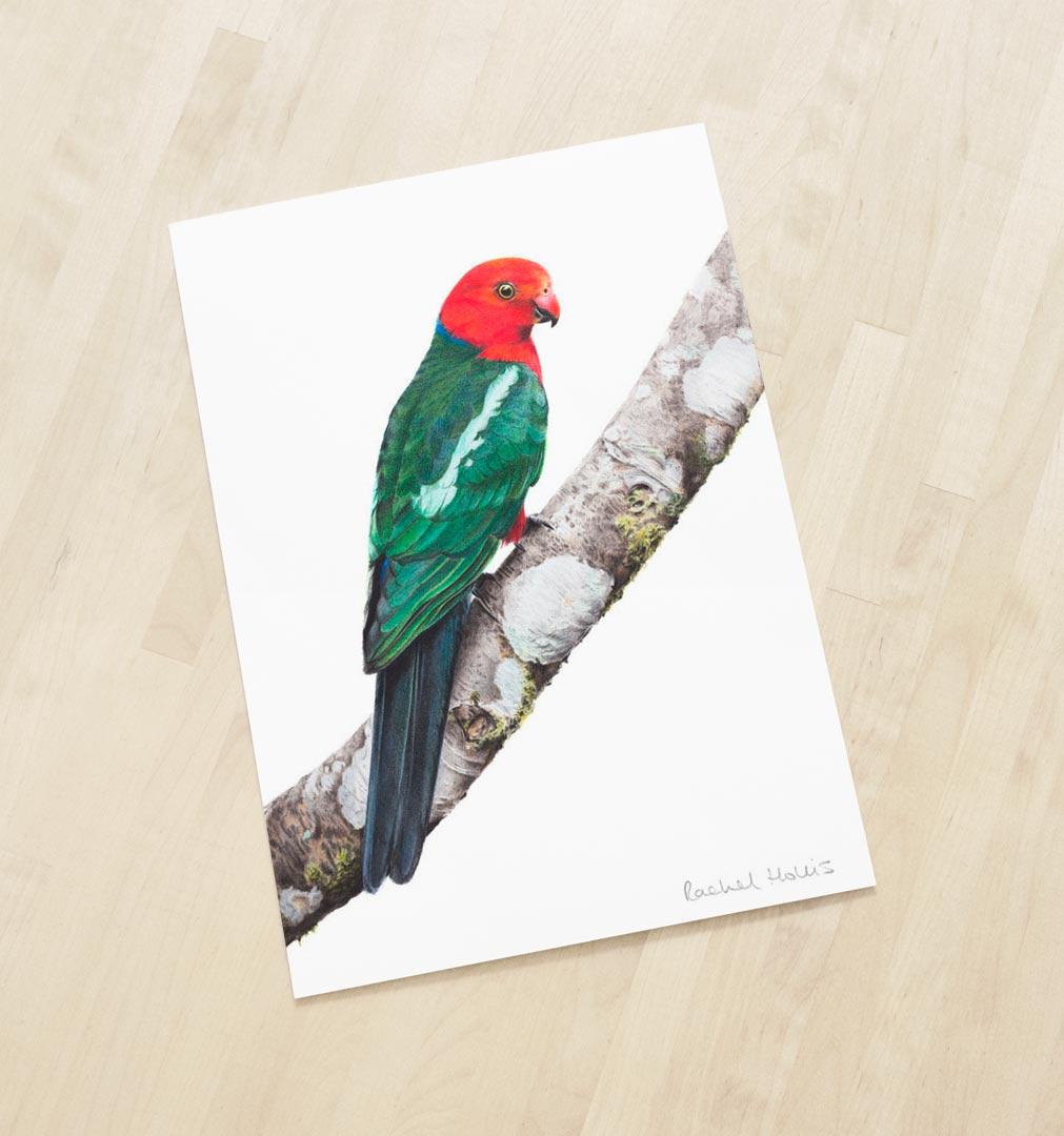 Australian King Parrot – Fine Art Print