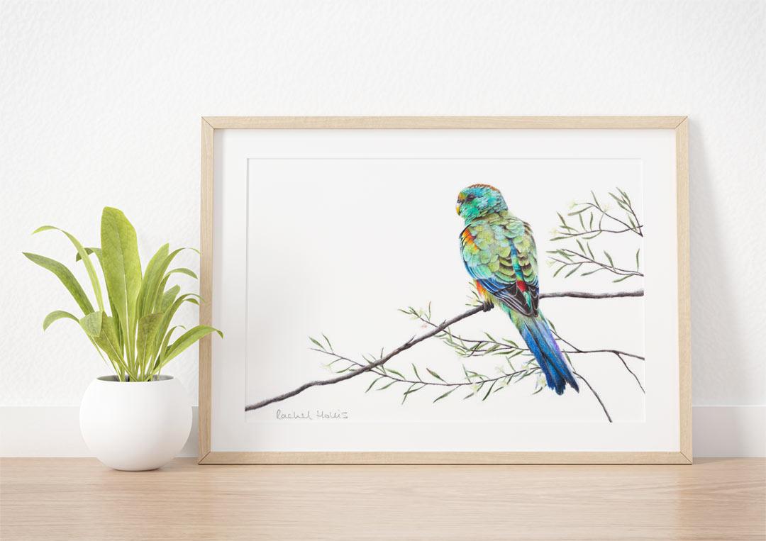 Mulga Parrot – Example of Framed Fine Art Print