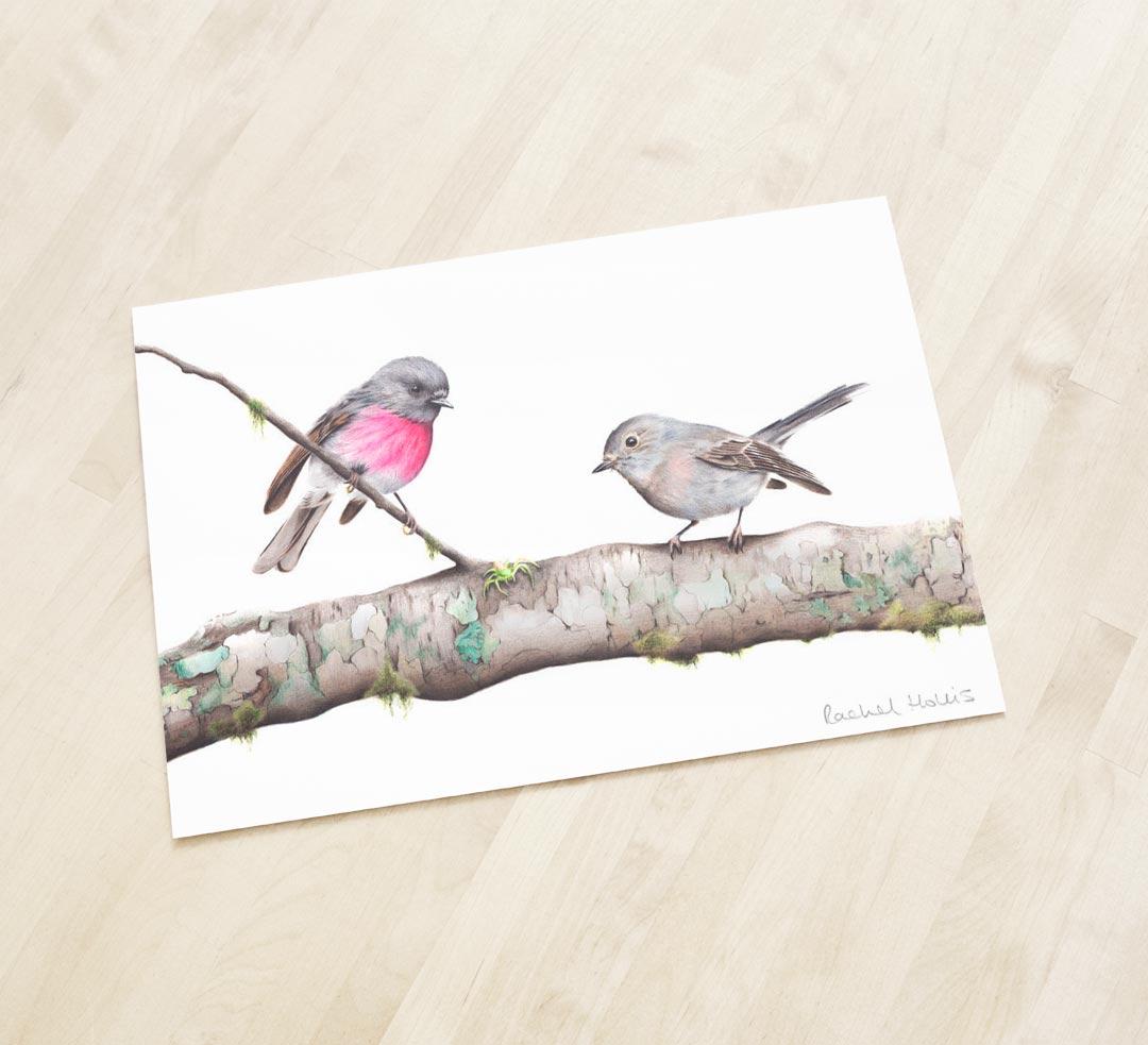 Rose Robins – Fine Art Print