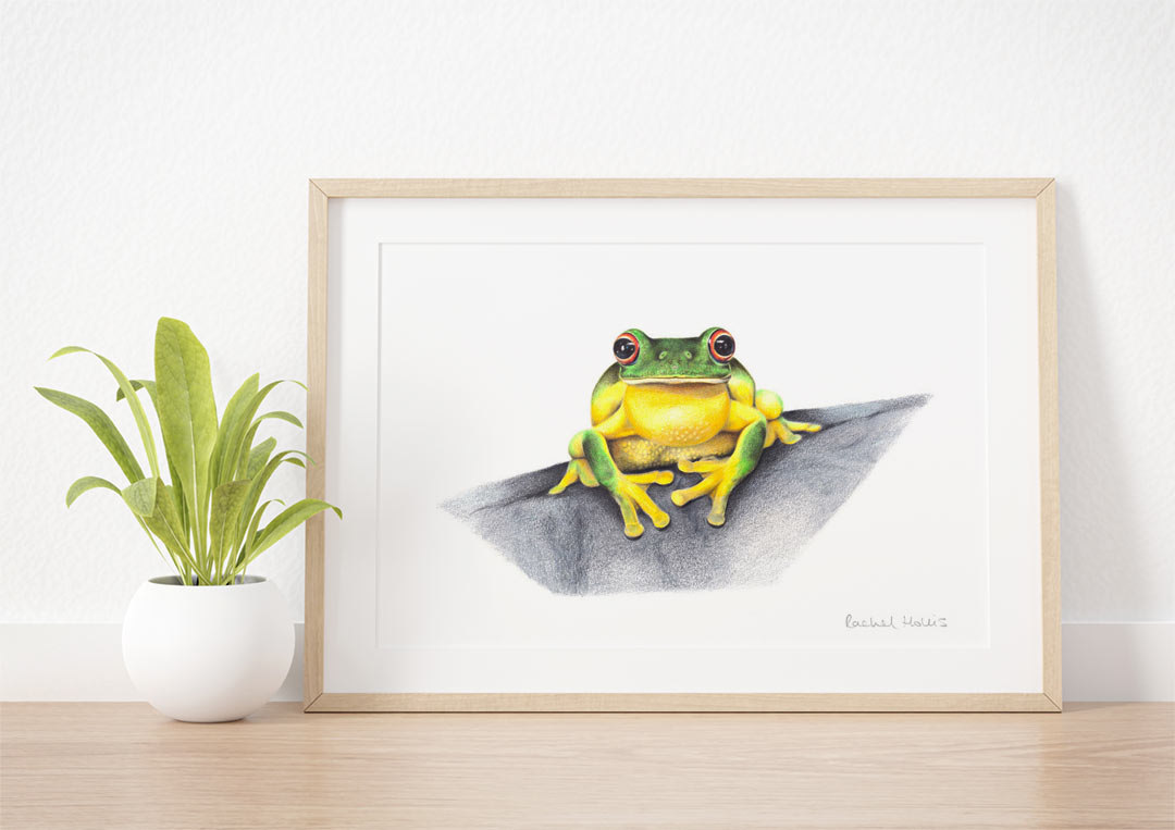 Red-eyed Tree Frog – Example of Framed Fine Art Print