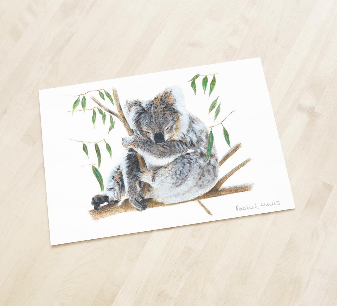 Koala – Fine Art Print