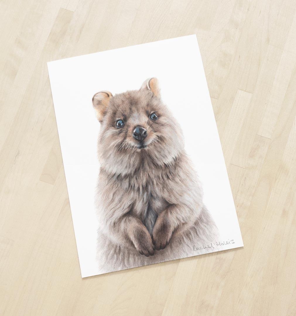 Quokka – Fine Art Print
