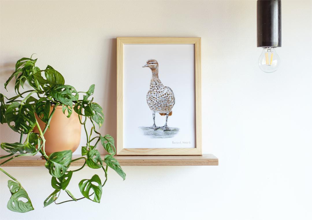 Australian Wood Duck – Example of Framed Fine Art Print