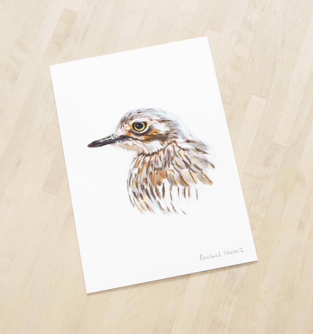 Bush Stone-curlew – Fine Art Print