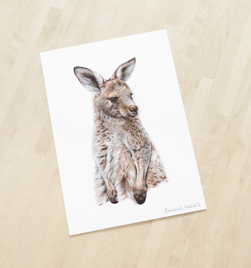 Eastern Grey Kangaroo – Fine Art Print