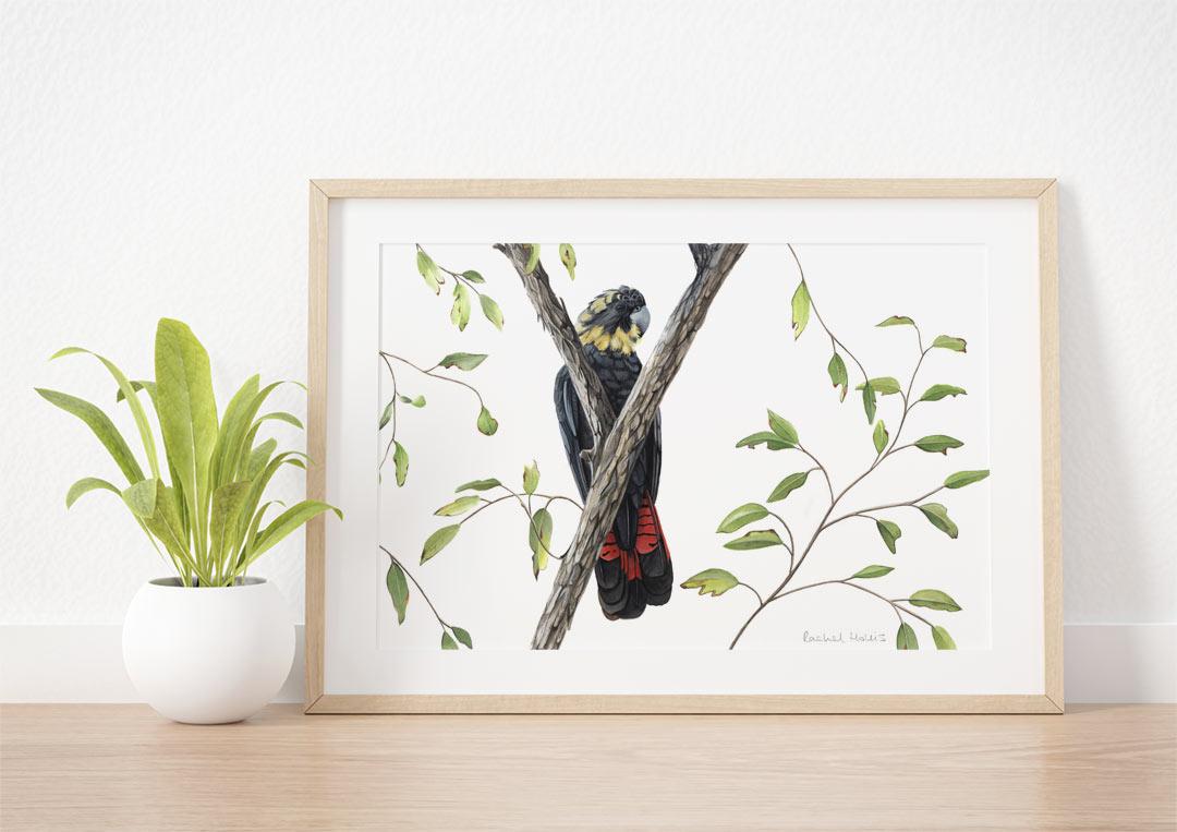 Glossy Black Cockatoo - Example of Framed Fine Art Print