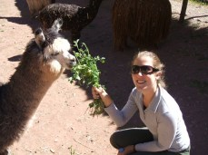 One of my favourite animals on my travels through South America: Alpacas. A farm just outside Cuzco allows some interaction with these comical characters.