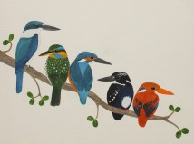 These are five of the eighteen species of kingfisher that are found in the Philippines! From left to right: collared kingfisher (found across Asia), spotted wood-kingfisher (endemic to the Philippines), common kingfisher (Europe, North Africa and Asia, the only kingfisher in the UK), silvery kingfisher (endemic) and Philippine dwarf kingfisher (endemic).
