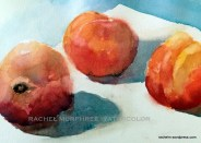 Two plus one. Two peaches and one nectarine.8 x 10 watercolor. $25.