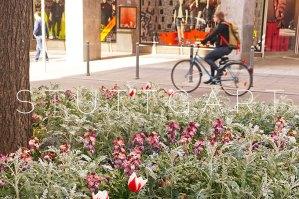 Stuttgart: Spring