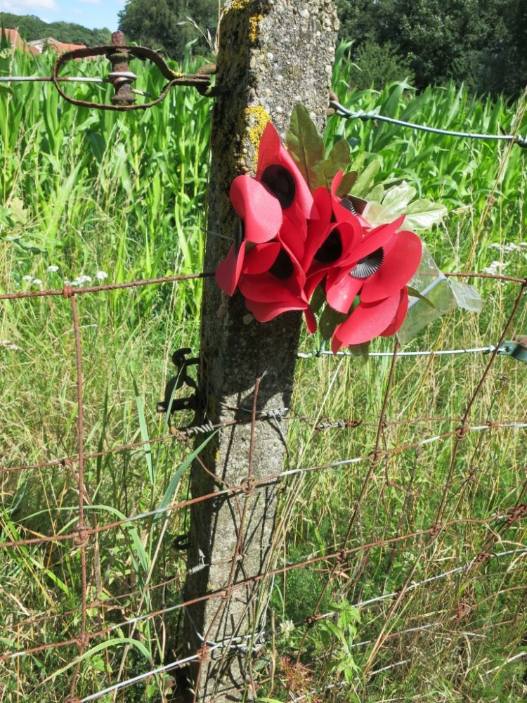 Poppies have become a symbol of remembrance of World War I