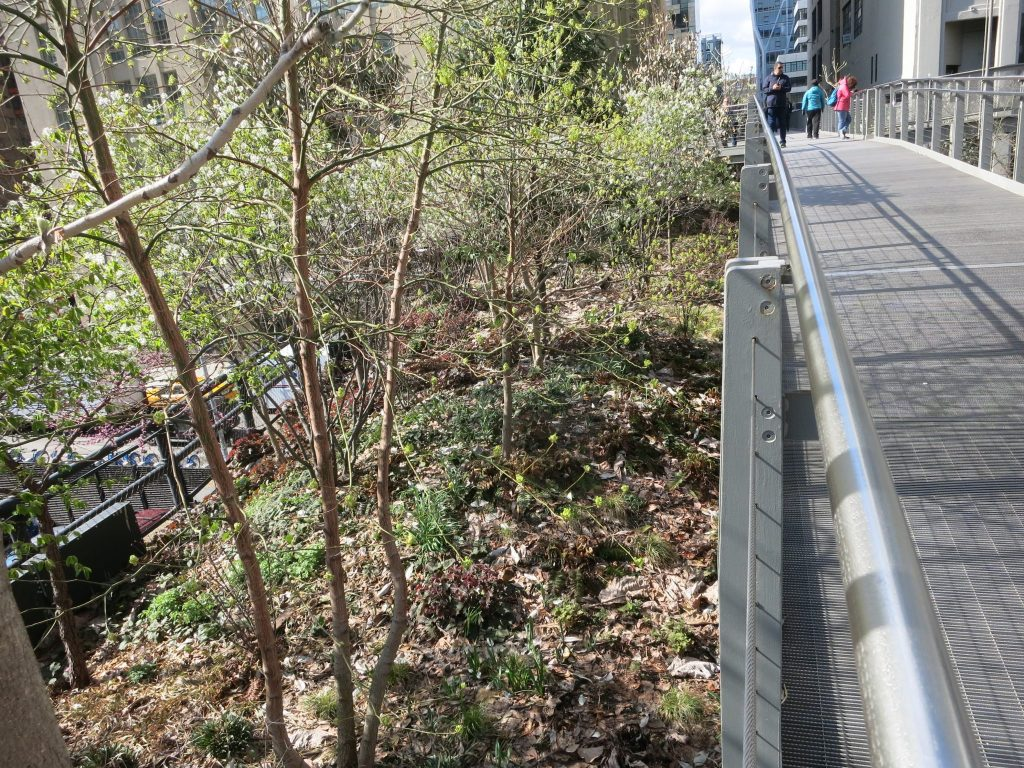 A view of the High Line showing a section where the plant life is left undisturbed.