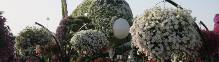 Dubai Miracle Garden: Absurdity in the desert