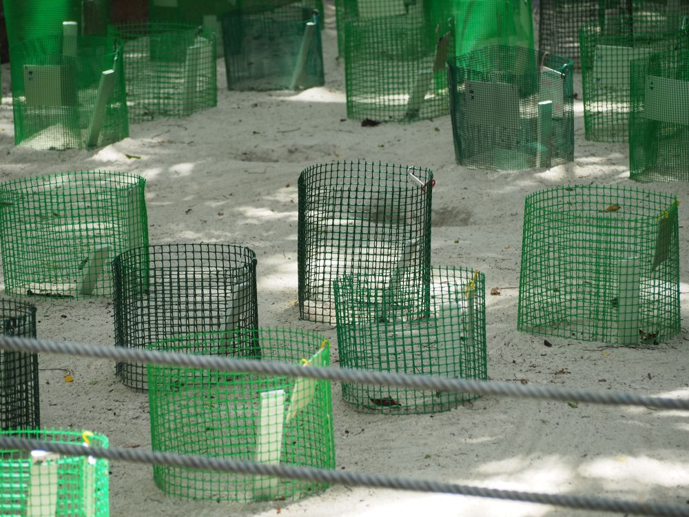 Each of those green cages marks a nest full of eggs. Turtle sanctuaries protect the eggs this way to make sure that more of them survive for release into the water.