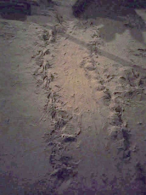 Turtle sanctuaries keep on the lookout for tracks like this, left by turtles climbing the beach to lay their eggs.