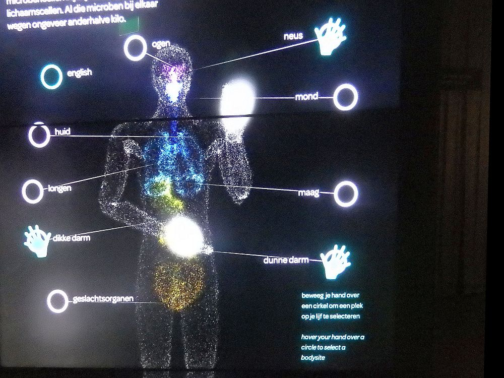 """This """"body scan"""" allows you to make choices by moving your hands. It looks like a colorful x-ray but with the body parts labeled."""