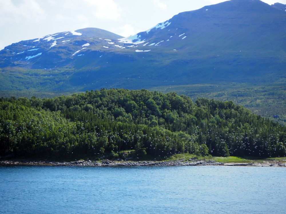 tree-covered land in the foreground. Behind: high mountains with a bit of snow in the creases.