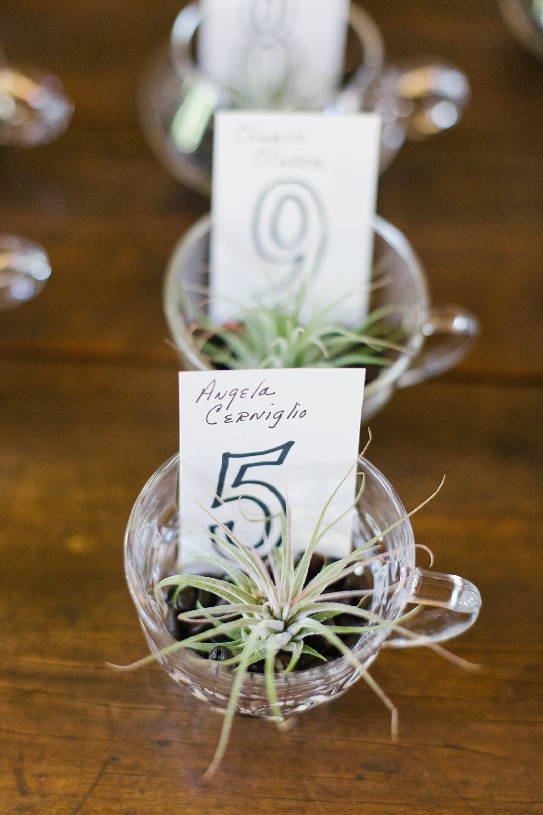 wedding detail photo of air plant party favors