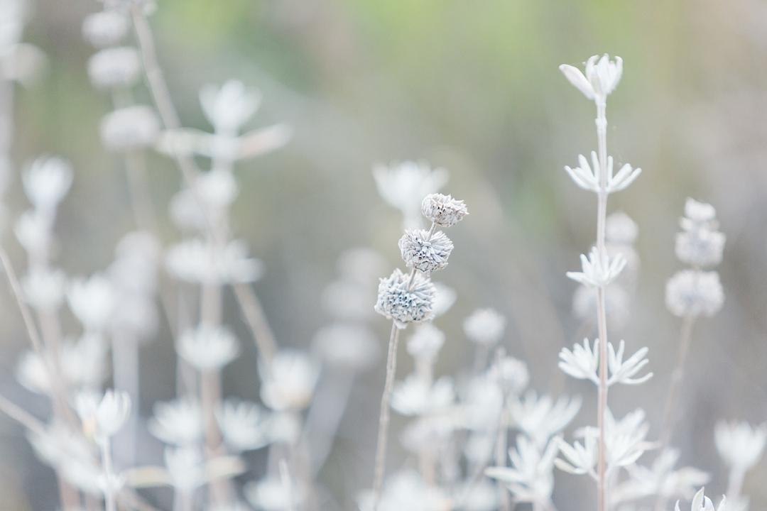 plants at solstice canyon