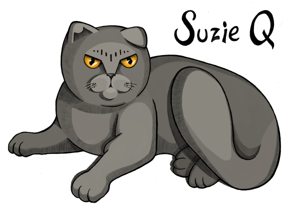 "Large grey cat with yellow eyes and a grumpy expression. Text reads: ""Suzie Q"""