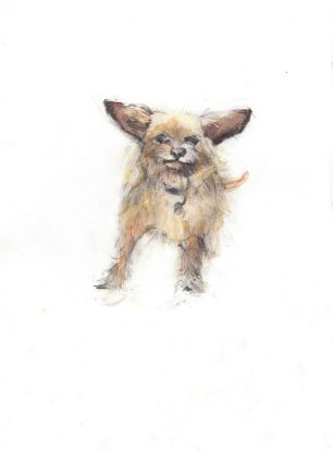 Archie the Chihuahua & King Charles Spaniel mix