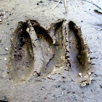 walk tracks
