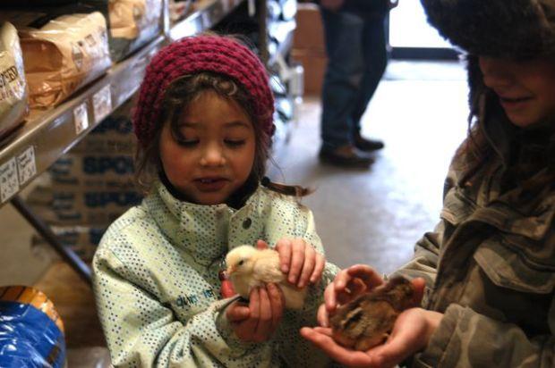 Chicken time! | Clean. : : the LuSa Organics Blog
