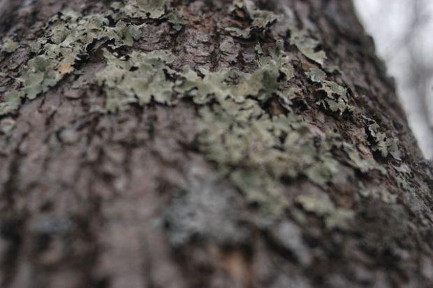 Winter. | Clean : : the LuSa Organics Blog