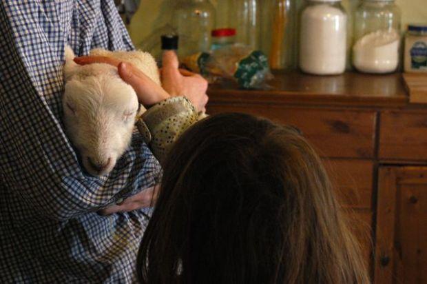 Sheep.   Clean. : : the LuSa Organics Blog