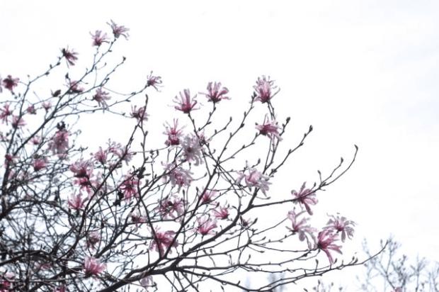 Magnolias   Clean. www.lusaorganics.typepad.com