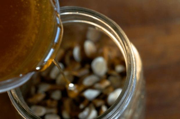 Making medicine: Elecampane honey cough syrup