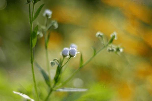 Ten tips for a happy life   Clean. www.lusaorganics.typepad.com