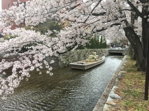 Random Sakura