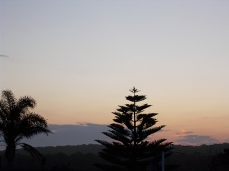 Sunset with a Norfolk Pine