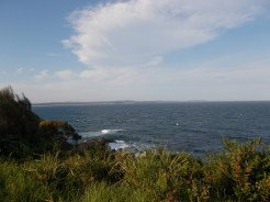 View from the headland