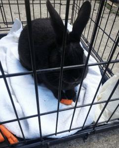 Missing bunny
