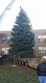 Community Christmas tree to be lit up on Saturday.