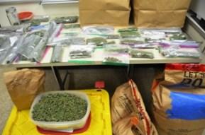 Marijuana arrest 4-40(1)