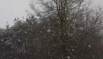 snowblowing mayhem