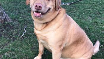Duke the Dog Needs a Family