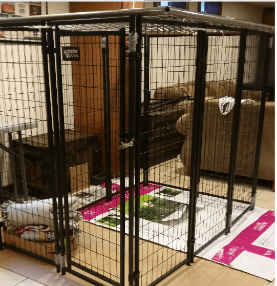 Dog Kennel Child abuse cage