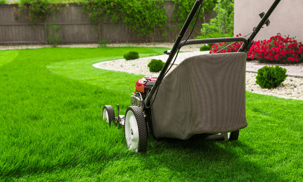 important lawn care tips you need to know